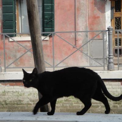 sur la trace de Corto Maltese