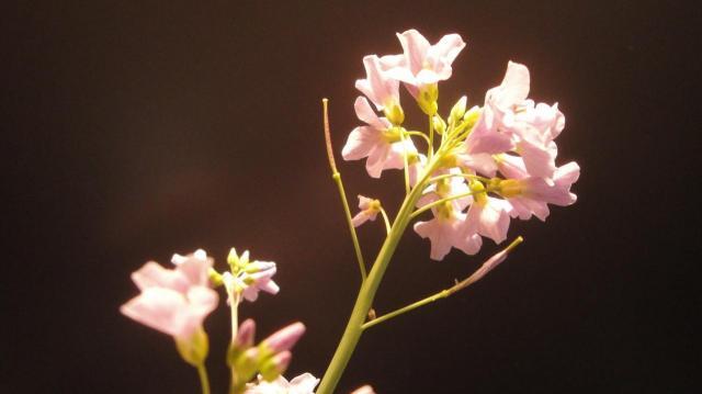 prière florale